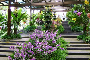 Kl orchid hibiscus gardens places to visit in kuala lumpur for Gardening tools kuala lumpur